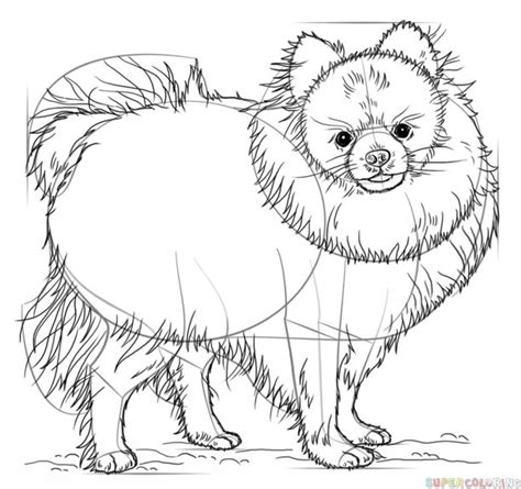 how to draw a pomeranian step by step 25 b 228 sta drawing tutorial id 233 erna p 229 teckningstekniker och