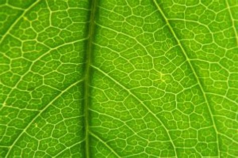 pattern dotted hole leaf green green leaf pattern detail photo free download