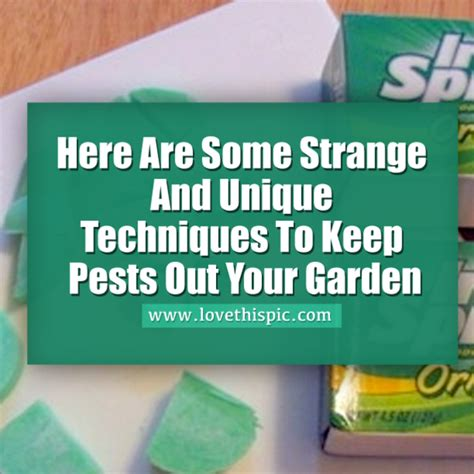 how to keep pests away from garden here are some strange and unique techniques to keep pests