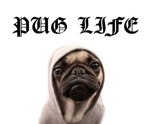 pug lige tuesday prompt pug or how to insert more pug into your prism international