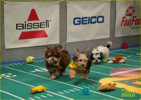 puppy bowl 2017 puppy bowl 2017 meet the dogs the more photo 3853462 2017