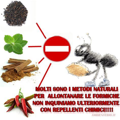 Allontanare Le Formiche Da Casa consigli naturali per allontanare le formiche da casa e