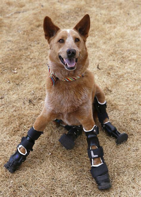 legged dogs hind leg bones breeds picture