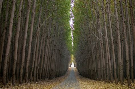will tree farm boardman tree farm in oregon usa amusing planet