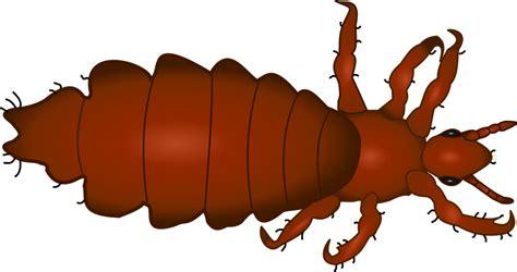como sellaman las imagenes sin fondo gratis vektorgrafik lus insekt djur gratis bild p 229