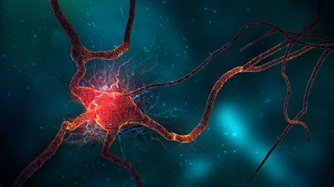 neuron cell wallpapers hd wallpapers id