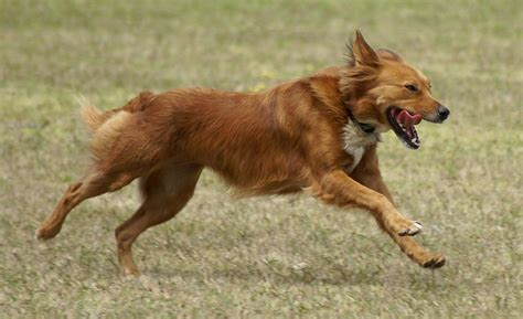 how fast do dogs run common mistakes owners make coming when called wag the