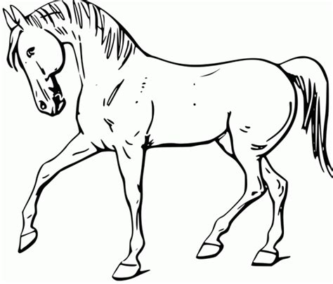printable coloring pages of realistic horses realistic coloring pages of horses realistic coloring pages