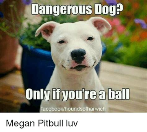 Serious Dog Meme - dangerous dog only if you re a bal