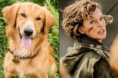 the dogs purpose box office preview resident evil the chapter takes on split a s purpose