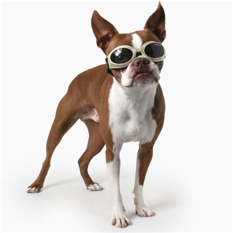 sunglasses for dogs sunglasses for dogs www panaust au
