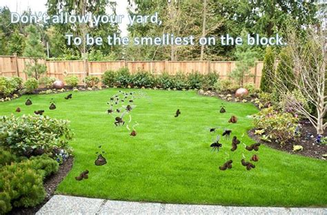 what to do with dog poop in backyard stinky smelly yard dog poop pet waste removal service atlanta pooper scoop dog