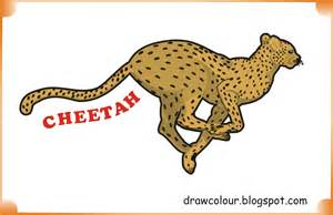 what color is a cheetah cheetah drawings with color