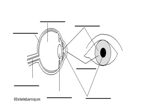 eye anatomy coloring page 14 best images of eye anatomy worksheet human eye
