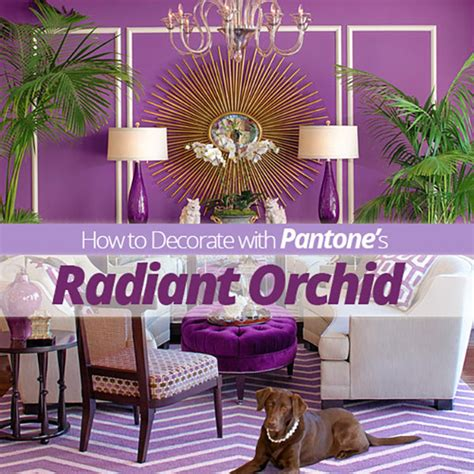 radiant orchid home decor how to decorate with pantone s radiant orchid homes