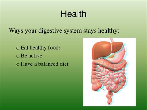 7 Tips To A Healthy Digestive System by The Digestive System