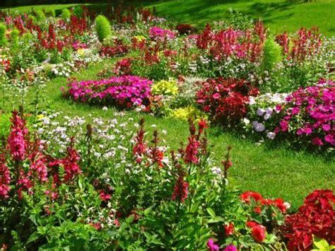 perennial flower bed designs backyard paradise pinterest