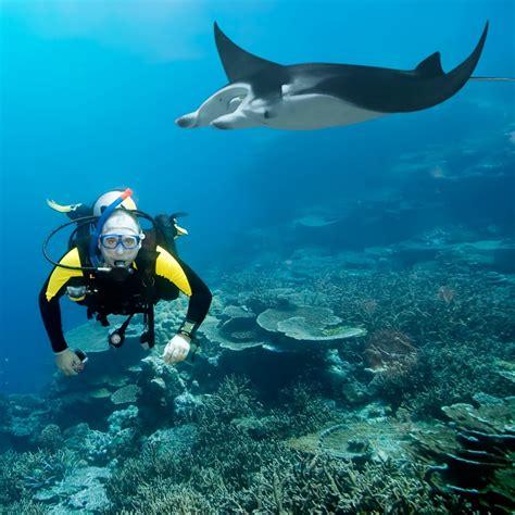dive vacations maldives diving vacation maldives holidays diving