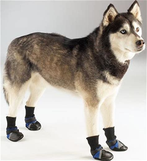 weather puppy blue guardian gear all weather boots