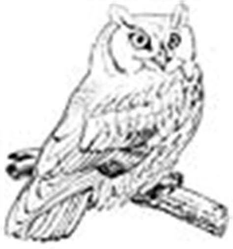screech owl coloring page screech owl animals town