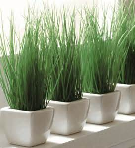Indoor Planters Potted Wheat Grass Modern Indoor Pots And Planters