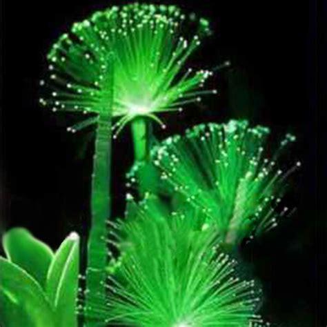 plant light 100 pcs emerald fluorescent flower seeds light
