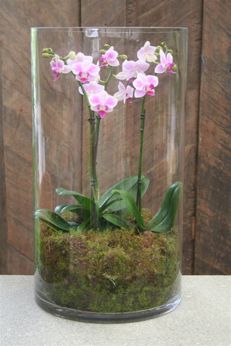 Orchid In Glass Vase by Orchid Phalaenopsis Display Vase Flower Bouquets