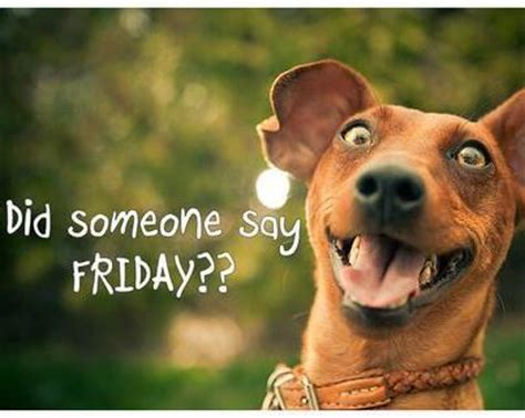 Dog Friday Meme - it friday funny quotes quotesgram