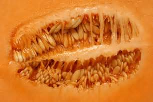 Lotus Skin Disease Fear Of Cantaloupes Crumpets More Is Trypophobia For