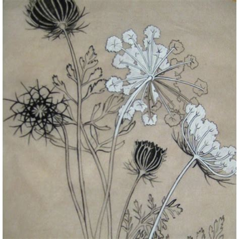 tattoo queen anne queen anne s lace would make a lovely tattoo tatty