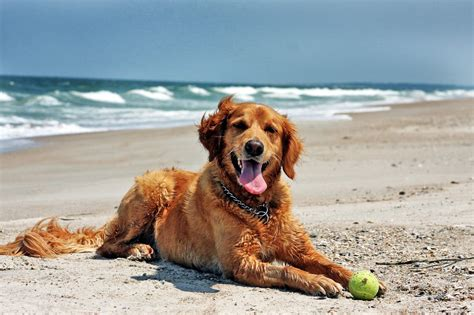 beaches that allow dogs australia s best friendly beaches australian lover