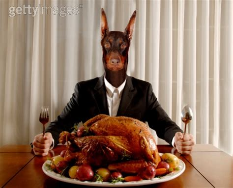eats turkey gallo images 106886472 doberman human sitting