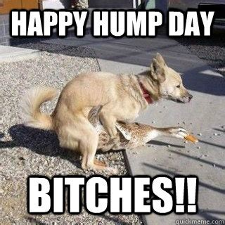 Happy Hump Day Meme - happy hump day meme the random vibez