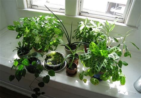 benefits of house plants benefits of houseplants interior design
