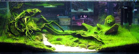 taiwanese aquascape creative use of algae
