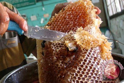 lebah membuat madu in english madu buloh seuma akan dipatenkan aceh selatan antara news