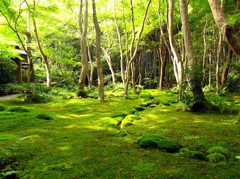 Moss Garden Kyoto by File Kyotogarden Jpg Wikimedia Commons