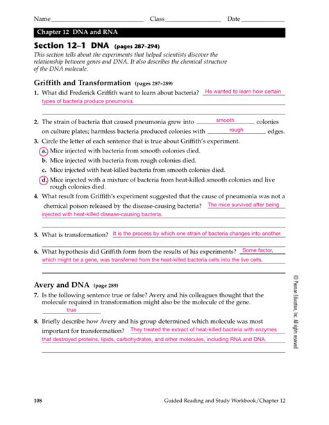 Chapter 12 Dna And Rna Worksheet Answers Wiildcreative