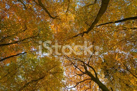 Canopy Of Leaves canopy of leaves stock photos freeimages