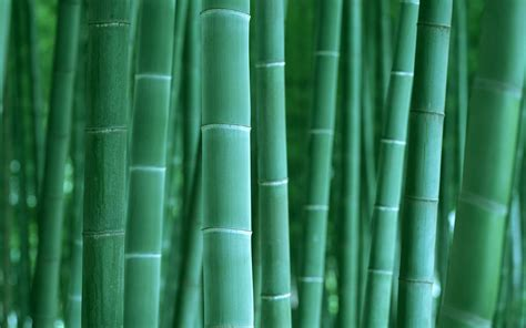 green wallpaper remover green bamboo wallpaper wallpapers hd wallpapers 85332