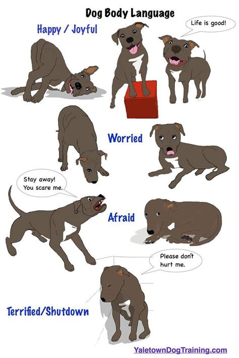 how to communicate with dogs dogs use language to communicate with each other and with humans the ability to