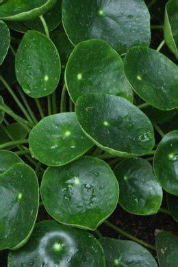 Tolle Zimmerpflanzen by Blattschmuckpflanzen Diverse Sorten Tolle Seite