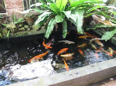 Koi Garden by Best 25 Pond Design Ideas On Garden Pond