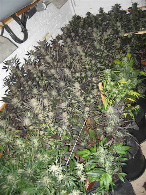 plants that grow in rooms q a with jorge plants marijuanagrowing