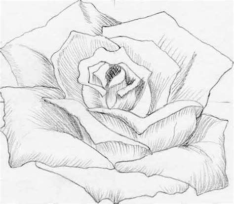 imagenes para dibujar a lapiz de flores m 225 s de 1000 ideas sobre dibujos de flores en pinterest