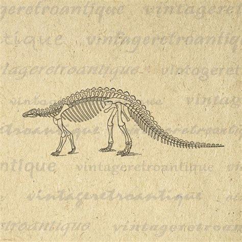 printable baby skeleton iron on 25 best ideas about image dinosaure on pinterest image