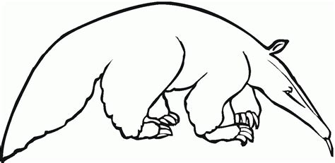 Anteater Coloring Page by Anteater Coloring Page Coloring Home