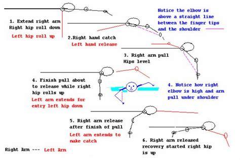 swim diagram freestyle swimming quotes quotesgram