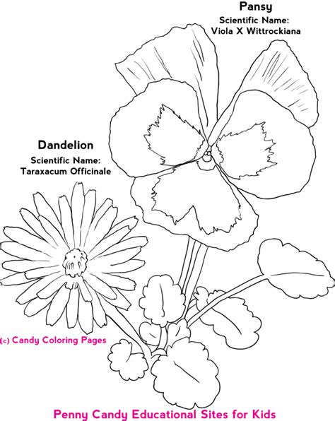 old testament coloring page coloring home