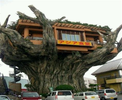 ultimate tree house plans ultimate tree 28 images surv adv ultimate tree survival 100 000 downloads